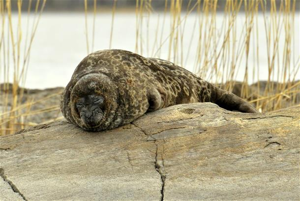 Seal safaris in May 2019